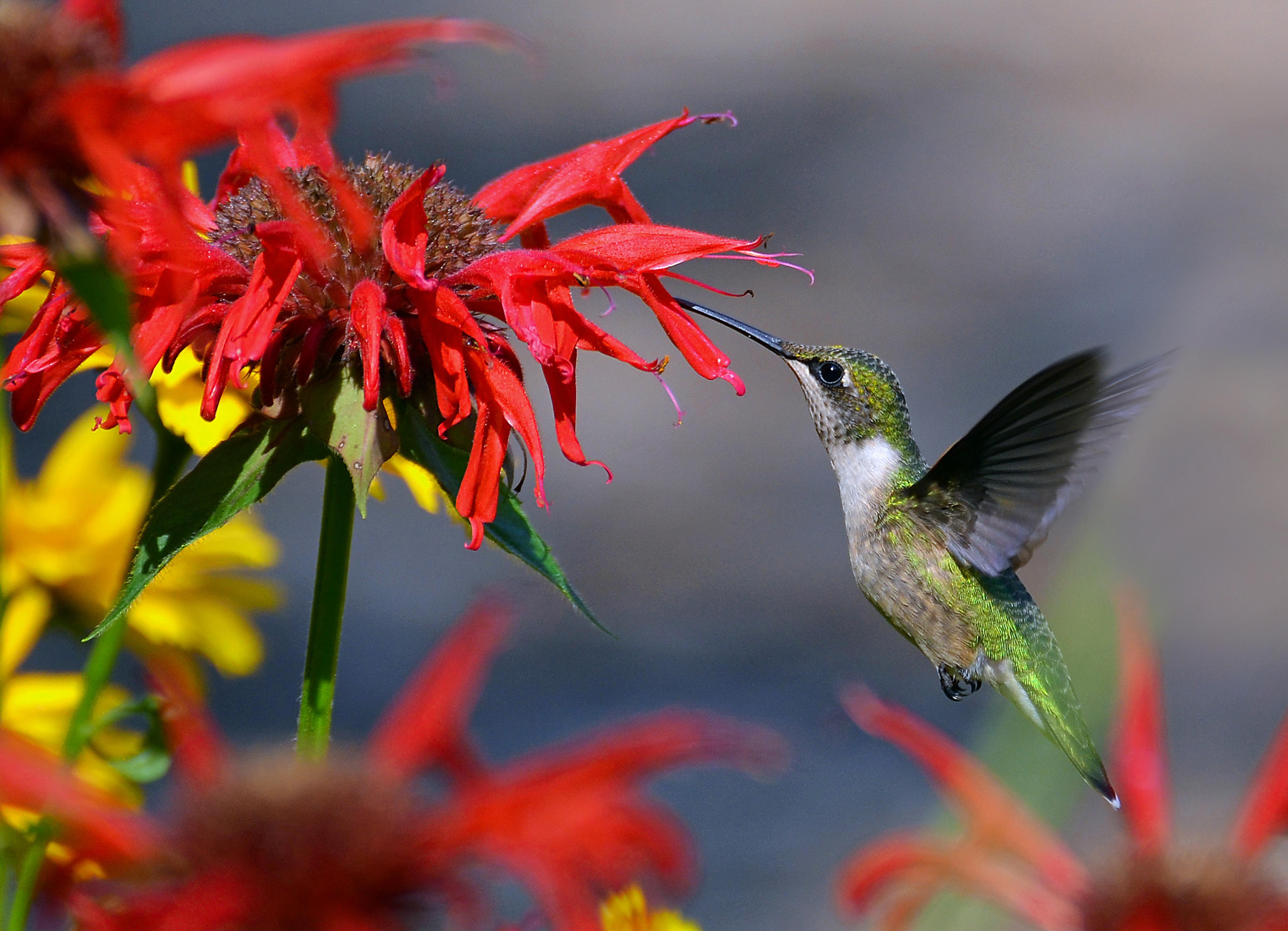 Aves exóticas en Santa Pola