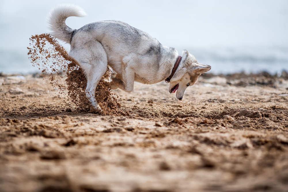 Una playa para perros en Santa Pola